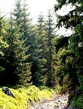 Traseul Saua Vartop - varful Bihorul, Bihor-Vladeasa, Muntii Apuseni, Foto: Hám Péter