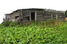 A Gruiesu erdészház maradványai, Fotó: Vasile Coancă