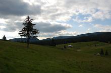 Bihor-Vladeasa, Muntii Apuseni - Padis, Foto: Veres Tibor