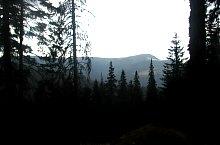 Prin pădure, Foto: Vasile Coancă