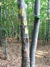 Fața Goală, în pădure, Foto: Kuti Ludovic
