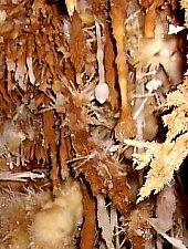 V5 vertical cave, Photo: Perényi Katalin