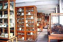 Cluj, Muzeul Botanic, Foto: Mihai Pușcaș