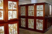 Növénytan múzeum, Herbárium, Fotó: UBB Kolozsvár