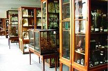 Növénytan múzeum, Fotó: UBB Kolozsvár