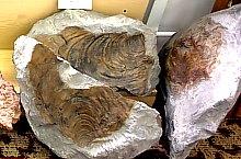 Cluj, Muzeul de paleontologie, Foto: Muzeul de paleontologie