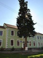 Scoala maghiara, Cehu Silvaniei , Foto: WR