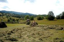 Rogozsel , Fotó: Anca Bolba