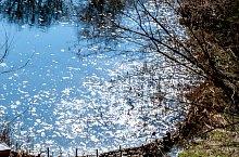 Lacul Negru, Sovata , Foto: Lender Zsolt