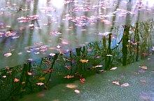 Lacul Verde si Lacul Rosu, Sovata , Foto: Janovocs GyurIca