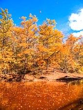 Lacul Verde si Lacul Rosu, Sovata , Foto: Portik Antal
