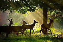 Izvoare , Foto: Ivoi vadaspark