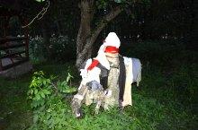 Urusos spring, Dealu , Photo: WR