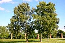 Rezervatia Dumbrava Harghitei,  , Foto: Wikipedia