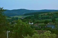 Paltinis , Foto: WR