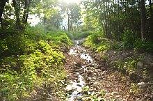 Creek Rez, Păltiniș , Photo: WR