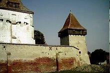 Boian, Foto: Plinul cel tanar, Wikipedia