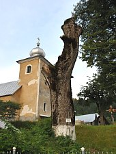 Paltinul secular, Cavnic , Foto: WR
