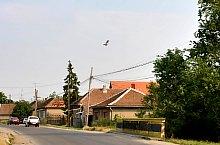 Ghenci , Foto: WR