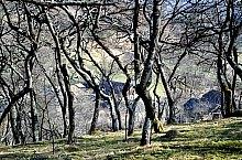 Răstolț , Photo: WR