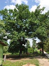 Parcul Banffy, Nusfalau , Foto: WR