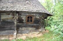 Fatemplom, Gorbósalamon , Fotó: WR