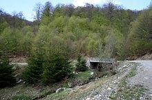 Targul de fete de la Gaina, Muntele Gaina , Foto: Cătălin Lucan
