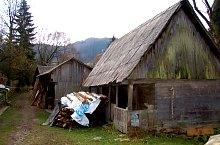 Valtori si mori, Vadu Motilor , Foto: WR