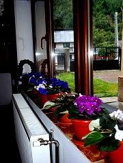 Pensiunea Cerbul Apusean, Albac , Foto: WR