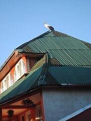 Anisoara panzió, Kiskóh , Fotó: WR