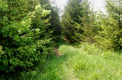 Roxaura halastó, Biharpoklos , Fotó: WR