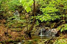 Molhosului völgy, Biharkaba , Fotó: WR