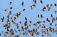 Birds, Danube Delta·, Photo: Iluță Goean