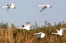 Birds, Danube Delta·, Photo: Luidort Péter