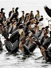 Birds, Danube Delta·, Photo: Mihai Baciu