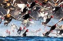 Birds, Danube Delta·, Photo: Daniel Petrescu