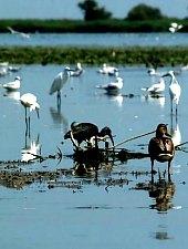 Birds, Danube Delta·, Photo: Horia Beschea