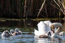 Birds, Danube Delta·, Photo: Bogdan Grigore