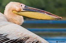 Birds, Danube Delta·, Photo: Cătălin Nenciu