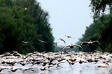 Birds, Danube Delta·, Photo: Dan Bândacu