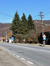 Csucsa , Fotó: WR
