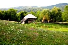 Arefu, Fotó: Ștefan Nicolescu