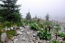 Cabana Valea Sâmmbetei - Șaua Răcorele, Foto: Paul Ion
