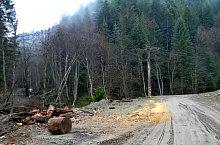 Traseul Sebes - Saua Comisu, Muntii Fagaras, Foto: Marius Mihai