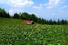 Sebesul de Sus - Cabana Suru prin valea Moașei, Foto: Marius Mihai