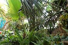 Gradina botanica, Jibou, Foto: WR