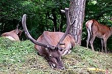 Gradina zoologica, Jibou, Foto: Matei Domnița