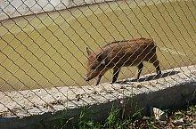 Gradina zoologica, Jibou, Foto: WR