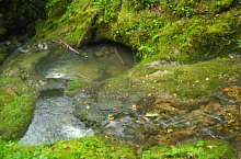 Boiului waterfall, Șuncuiuș , Photo: Szűcs Irén