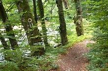 A völgy baloldali körútja jelzett turistaút, Királyerdő, Fotó: WR